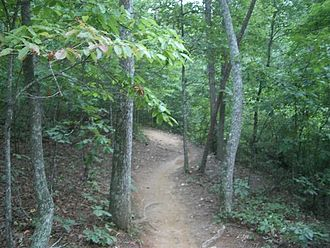 Single track (mountain biking) - A singletrack trail near Woodstock, Georgia (U.S.).