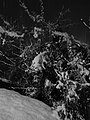 Sinigo under the snow in South Tyrol Italy Photo by Giovanni Ussi Bnw by night (4).jpg