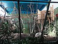 Skansen (museu a l'aire lliure i zoo), Estocolm (abril 2013) - panoramio (1).jpg