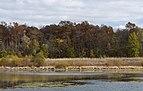 Slate Run-Wetlands in Fall 2.jpg