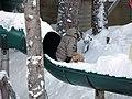 Snowy landing (2046911943).jpg