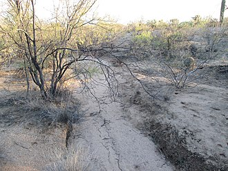 Arroyo (creek) - An arroyo in the Sonoran Desert of Arizona