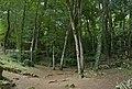 Sous-bois Dordogne.jpg