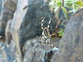 Spiderinweb.jpg
