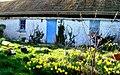 Spring in Carntullagh - geograph.org.uk - 1214801.jpg