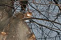 Squirrel Flash (5140319251).jpg