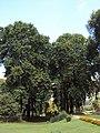 Srinagar - Shalimar Gardens 15.JPG