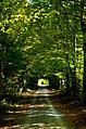 Stadtwald (61198502).jpeg