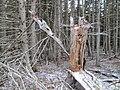 Stanhope Beach Trail, PEI National Park (15904071489).jpg