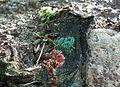 Stara skarpeta stapia się z przyrodą, Promno.jpg