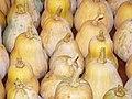 Starr-131002-2355-Cucurbita moschata-harvested fruit-Hawea Pl Olinda-Maui (24931635100).jpg