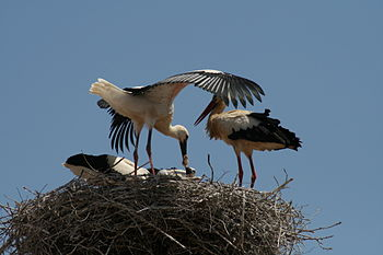 English: Stork nest in Silves, Portugal