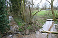 Stream nr Poole Old Hall.jpg