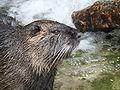 Suisse zoo (28).jpg