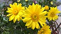 Sunflower by Rosidd 3.jpg