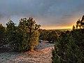 Sunset across trees outside Santa Fe.jpg