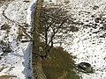 Sycamore Gap (3) - geograph.org.uk - 750535.jpg