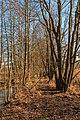 Tůně v NPR Bohdanečský rybník 12.jpg
