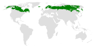 Canadian biome characterized by coniferous forests
