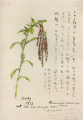 TakehisaYumeji-1932-Sketch of Wild Flowers.png