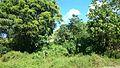 Talaingod-San Fernando Road - panoramio (40).jpg
