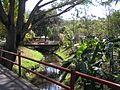 Tao garden nature.JPG