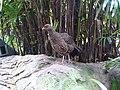 Taronga Zoo (6182523984).jpg