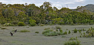 Marsupial lawn fields of grass highly suitable as habitat for marsupials