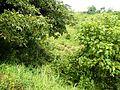 Taysan,Lobo,Batangasjf9639 28.JPG