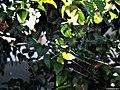 Telaraña en las ramas de un jardín.jpg