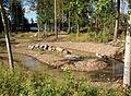 Tervahaudanpuiston hulevesikosteikko.jpg