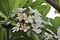 Thai Flower (47589023222).jpg