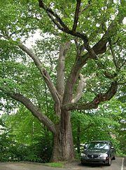 The 1812 Oak, Watertown, CT - August 4, 2011