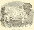 The American shepherd- being a history of the sheep, with their breeds, management, and diseases (1851) (14759604296).jpg
