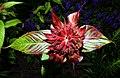 The Blooming Crimson Bee Balm (217748145).jpeg