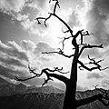 The Tree Seoraksan South Korea Black And White Photography (255194633).jpeg
