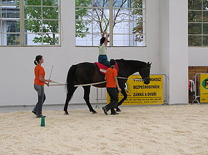 Equine-assisted therapy - A demonstration of hippotherapy in Europe