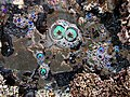 Tide pools bubbles.jpg
