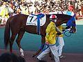 Tokyo Daishoten Day at Oi racecourse (31982198645).jpg
