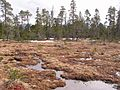 Tongass National Forest Muskeg Meadows.jpg