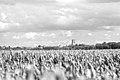 Tongeren Skyline (35895375064).jpg