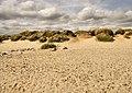 Top of the Beach, Hengistbury Head - geograph.org.uk - 1444648.jpg