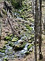 Trail - Third Volt Falls, Fundy National Park, NB.jpg