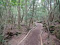 Trail toward the Lake Saiko Bat Cave.JPG