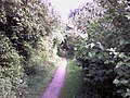 Trans Pennine Trail - geograph.org.uk - 549424.jpg