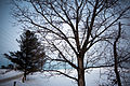 Tree in winter on the Oak Ridges Moraine.jpg