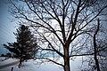 Tree in winter on the Oak Ridges Moraine.jpg