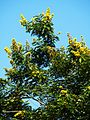 Trees in Bangladesh 1.JPG
