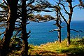 Trees on the Coast (Coos County, Oregon scenic images) (cooDA0058).jpg