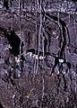 Tubular lava stalactites.jpg